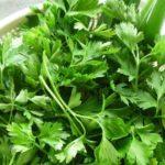 Chá de Salsa – Benefícios e propriedades