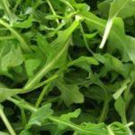 Chá de Rúcula- Benefícios e propriedades dessa planta