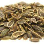 Chá de endro – Benefícios e propriedades