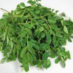 Chá de moringa – Benefícios e propriedades