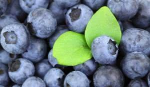 conheca-a-receita-para-fazer-um-super-cha-antioxidante