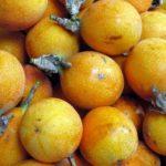 Chás feitos à base de frutas e seus benefícios para a saúde