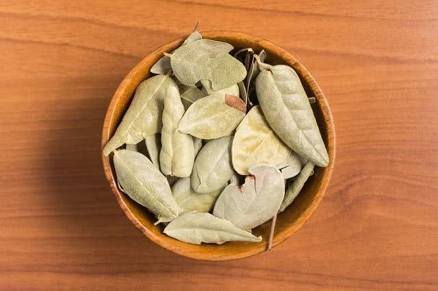 Trate intestino preguiçoso com chá de boldo do Chile