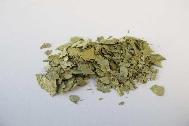 Imagem de folhas de sene