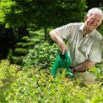 Preparando um chá de húmus para suas plantas