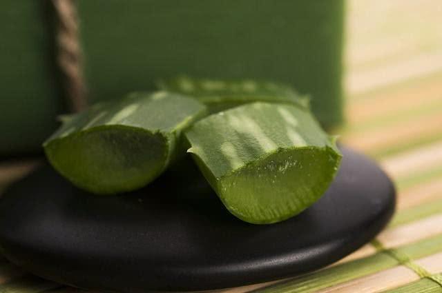 Imagem de partes da Aloe vera