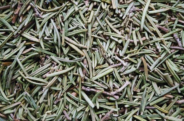 10-ervas-medicinais-que-curam-enfermidades-atraves-de-chas alecrim