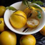 Benefícios e propriedades do chá de abiú