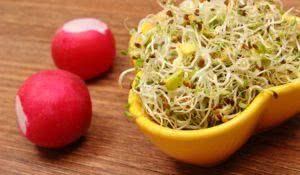 Yellow bowl with fresh alfalfa sprouts and radish on wooden surface, healthy lifestyle diet food and nutrition